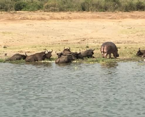 Wild animals in Uganda