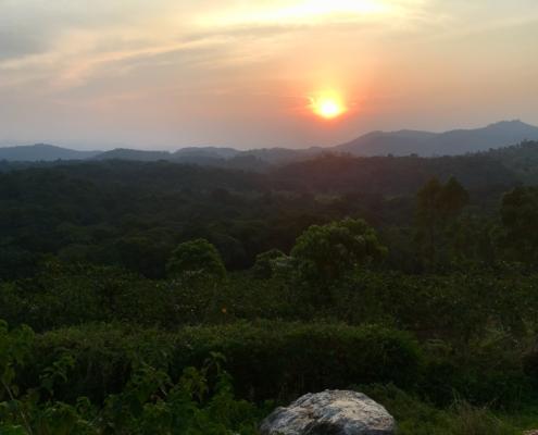 Uganda Nature